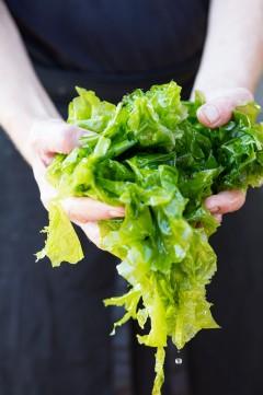 Algues fraîches-59_BD